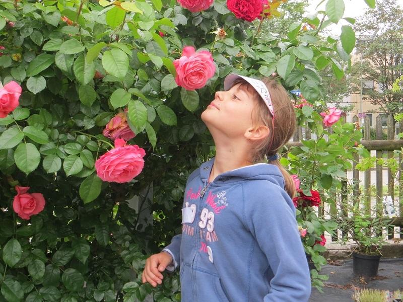 Der Rosenstrauch von Nadja
