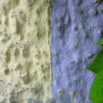 Besonderheit Bernrieder Str.9-21 Bunte Fassaden (3)