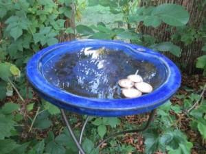 schwimmlicht_fertig1_ag_tipp